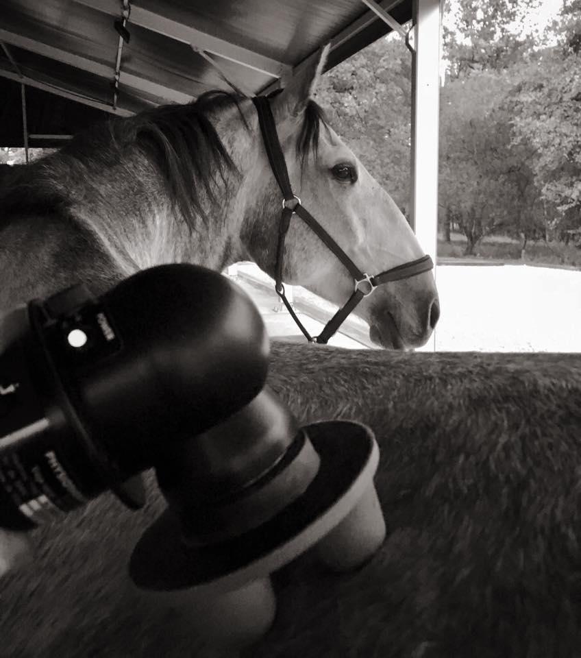bodywork equin massage G5 Equitec