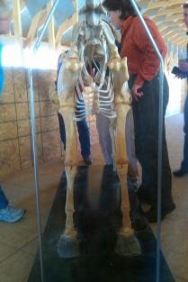 skeleton1strib1.jpg